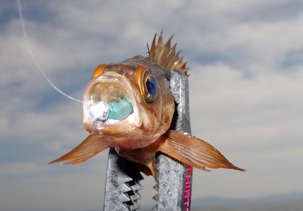 D_Groove Blog/No Fishing No Life.-8