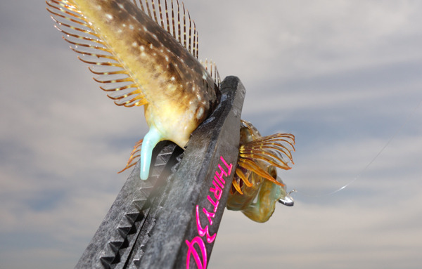 D_Groove Blog/No Fishing No Life.-15