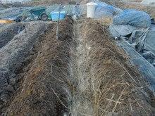 耕作放棄地を剣先スコップで畑に開拓!週2日家庭菜園有機野菜栽培の記録     byウッチー-130129ジャガイモ跡地の畝間深掘り作業と畝間施肥09