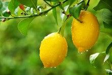 $Stella Maris アロマの時間-レモン