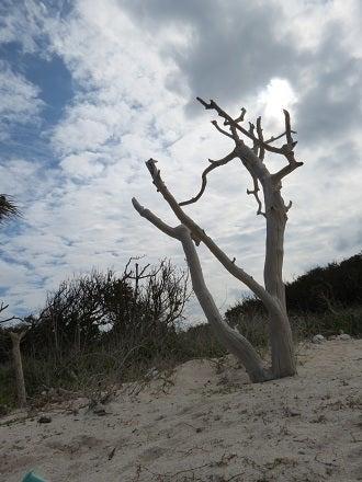 虚無の影が射す澄みきった砂浜―...