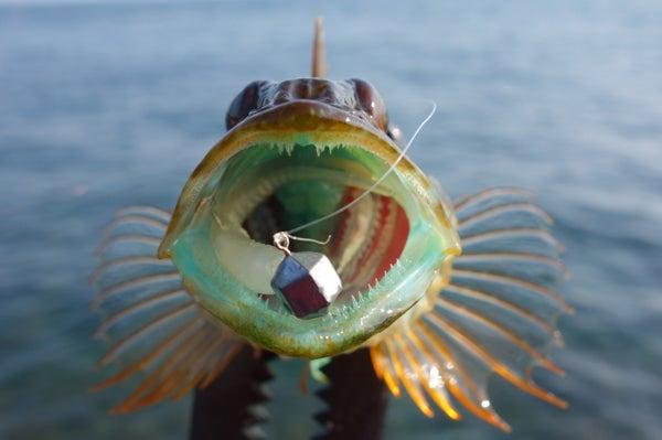 D_Groove Blog/No Fishing No Life.-14