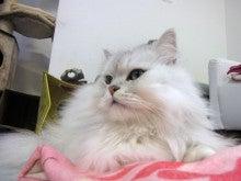 猫のまほう 蒲田東口店  かまちゃんブログ