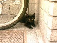桂米紫のブログ-御徒町の野良猫.jpg