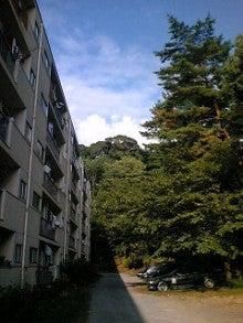 桂米紫のブログ-夏.jpg