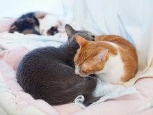 猫カフェ とらくんのブログ