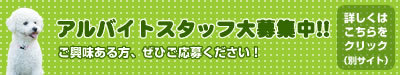 $ドッグキャンパス船橋店&ドッグラン 【ららぽーとTOKYO-BAY内】-satff_20130202-2.jpg
