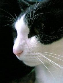 桂米紫のブログ-端正な横顔.jpg