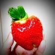 苺の季節の件