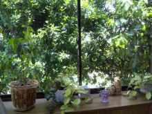 $福岡・柳川市 隠れ家エステサロン  マールの五感を育てる日々のブログ