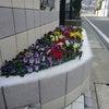 花いっぱい花壇の画像