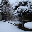 雪・風邪・レモンチェ…