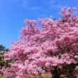指宿の春の兆し