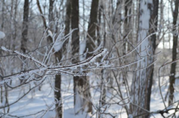Kukuru-color-樹氷。