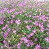 小さな花の画像