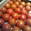 完熟トマトの画像