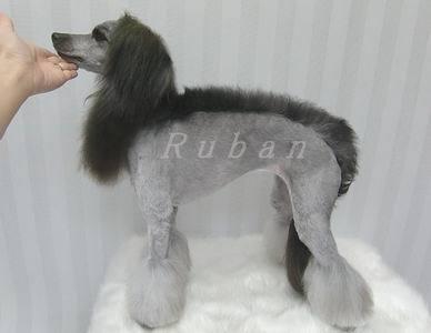 DOGサロン Ruban