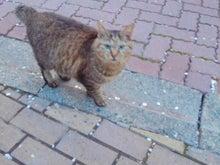 猫も進化してイル!-2012041605030001.jpg