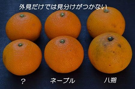 にわかFarmer-kannkiturui-2
