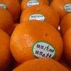 蜜柑橘の画像