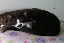 社)アニマルエイド 里親さん探しをしている猫達の情報ページです☆