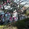 もうすぐ春ですね^^の画像