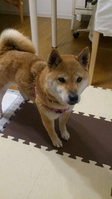 Pooch Dog Rescue-未設定
