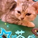 トリミング★2月24日の記事より
