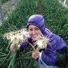 テマラマ農園~MARAMA MISAKIの休日~の画像