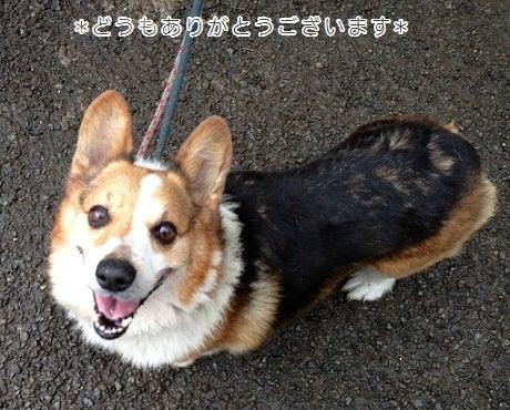 社)UKC JAPAN アニマルレスキュー-9