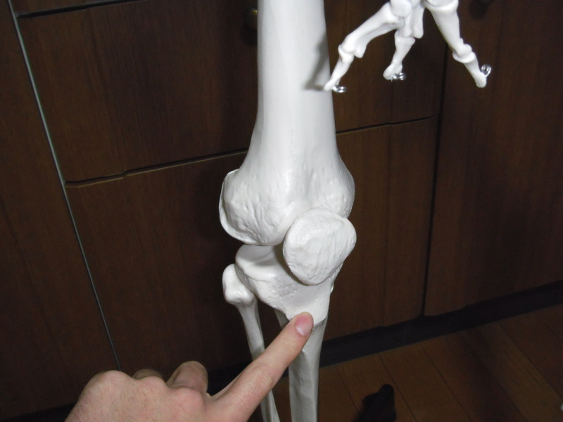 膝の痛み(お皿の下)~状態と改善方法~|片山卓哉のブログ ...