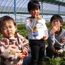 イチゴ大収穫祭!!
