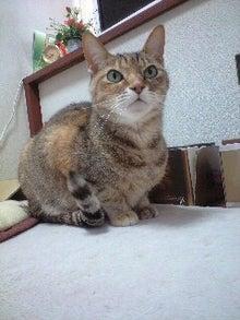 ずれずれブログ…湘南で猫と暮らせば…-CA390148-0001.JPG