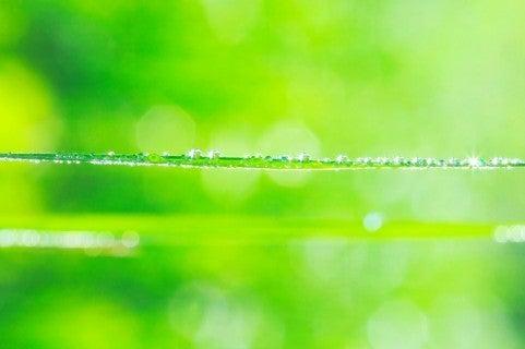【改訂】心・体・魂の総合ケア フラワーエッセンススクール 特徴と詳細の記事より
