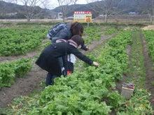新鮮野菜収穫体験ツアー-体験②