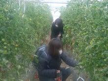 新鮮野菜収穫体験ツアー-体験①