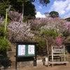 伊豆の国市内 花情報の画像