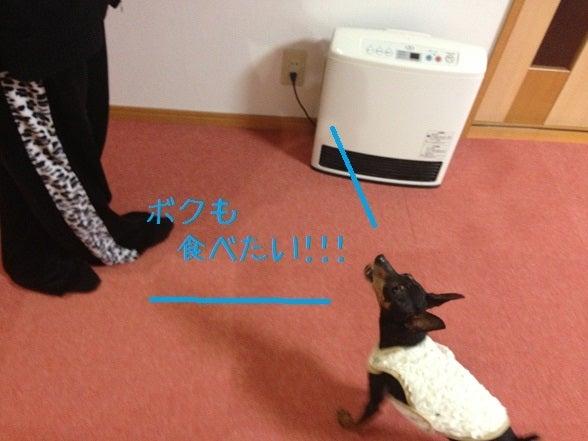 ミニピン!!! 大和!!! 武蔵!!!-2013.03.06-1