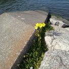 松崎にも、春のあしおと。の記事より