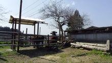 宮崎県繁殖農家のブログ-ひよ