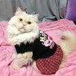 モデル猫☆