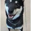 伊勢崎市 本庄市 犬のしつけ 合同訓練(グッドワン)の画像