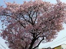 $Bar JERK-桜