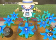 荒波ボヤージュ-青い花