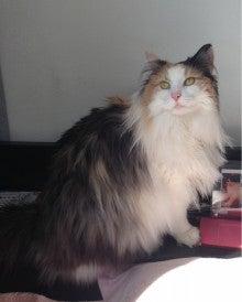 美猫ちゃんブログ-ノルウェージャン・フォレストキャット 美猫