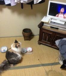 美猫ちゃんブログ-亀田兄弟 画像