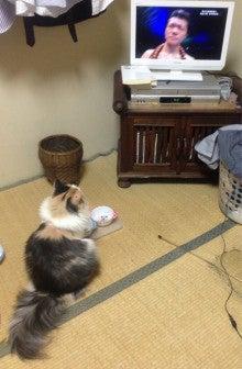美猫ちゃんブログ-亀田大毅 画像