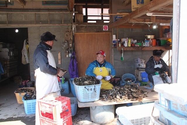 中島みゆき(記者)です。-牡蛎の種付け作業をする小川英樹さん(中央)
