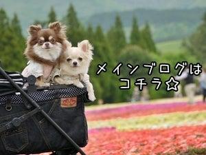 はなまる☆キャンプ