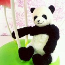 午後の部!癒しパンダ…